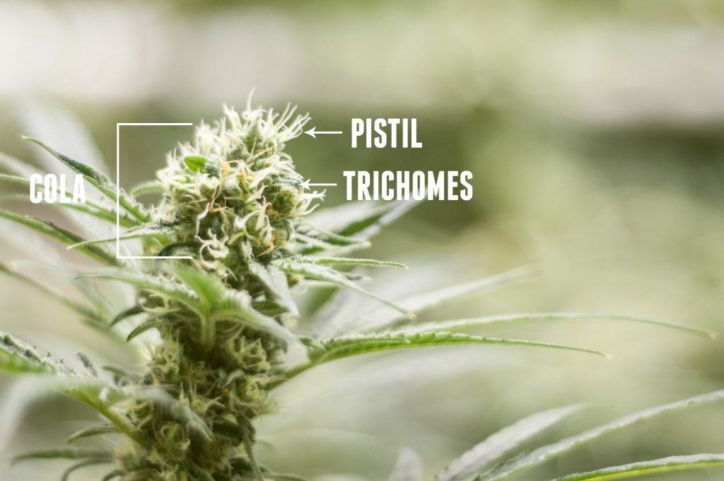 plant_details